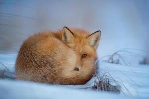 winter treasure hunts